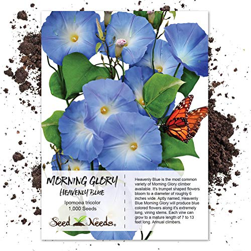 Seed Needs, Heavenly Blue Morning Glory (Ipomoea tricolor) 1,000 Seeds Untreated