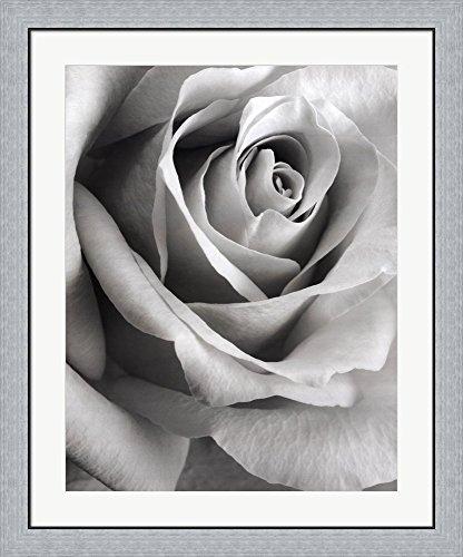 Steven Meyers Rose - 6