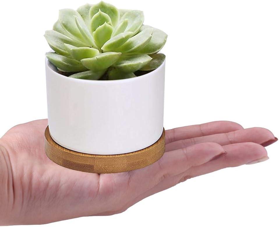 Sukkulente Pflanzgef/ä/ße Pack of 4 zoutog wei/ß Keramik Mini 8/cm Flower Pflanztopf mit Bambus Tablett Pflanzen nicht im Lieferumfang enthalten