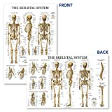 Palace Learning Muscular & Skeletal System