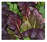 David's Garden Seeds Mustard Greens Red Giant SL3778 (Red) 500 Non-GMO, Heirloom, Organic Seeds