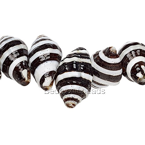 20 Natural Black & White Striped Genuine Whelk Whole Sea Shell Seashell Beads