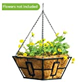 Panacea Products (3) ea 87850 14'', Black Square Contemporary Style Hanging Basket Planters w Coco Liner