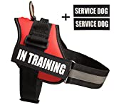 Fairwin Service In Training Dog Vest Harness, Dog Reflective Vest with IN TRAINING Patches for Large Medium Small Dogs …