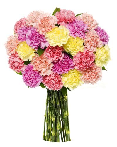 Benchmark Bouquets 25 Stem Pastel Carnations, No Vase