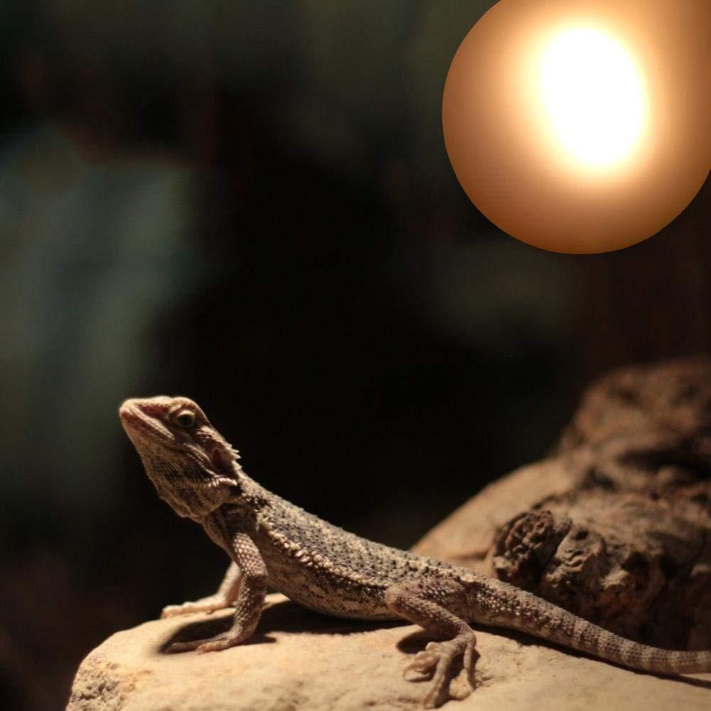 100W Lampadina per riscaldamento rettile Luce soffusa e smerigliata Lampada riscaldante per riscaldamento di luce Lampadina per rettili Anfibi Lucertola Tartaruga Ragno serpente Camaleonte 220-240 V
