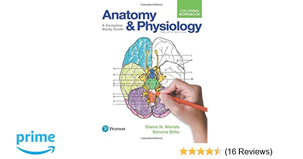 Amazon Anatomy And Physiology Coloring Workbook A Complete Study Guide 12th Edition 9780134459363 Elaine N Marieb Simone Brito Books