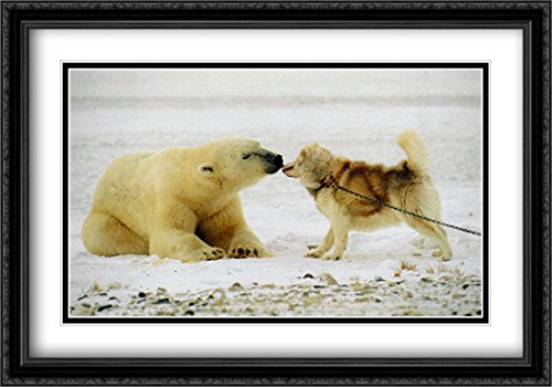 Polar Kiss 2x Matted 40x28 Large Black Ornate Framed Art Print by Thomas (Polar Kiss)