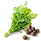 20 Arugula Seed Balls (Salas Rocket)- Herb & Vegetable Seed Bombs to make gardening fun and simple!