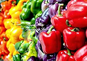 Serendipity's Sweet Rainbow Pepper collection 50 seeds 5 Varieties