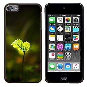 GIFT CHOICE / Teléfono Estuche protector Duro Cáscara Funda Cubierta Caso / Hard Case for Apple iPod Touch 6 6th Touch6 // Shiny green leaves //