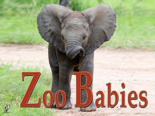 german-zoo