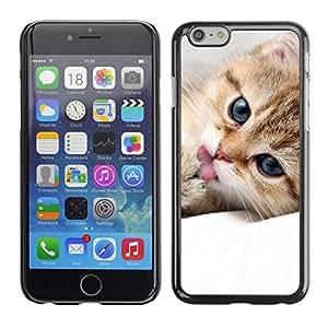TopCaseStore / la caja del caucho duro de la cubierta de protección de la piel - Maine Coon Kitten Cute Pet Feline - Apple iPhone 6 Plus 5.5