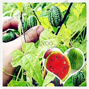 Amazon.com: Jardín para – 10 piezas/bolsa pulgar sandía ...