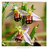 fino shop 100 Seeds China Rare Flower Bee Orchid Flower Seed Smile Face Interesting Flowers Seed