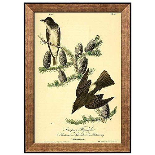 Beautiful Illustration Inside of an Elegant Frame of a Cooper