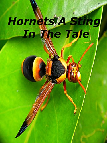 Hornets A Sting In The Tale