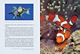 A Field Guide to Tropical Reef Fishes of the