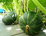 Japanese Pumpkin Kabocha Seeds - Open Pollinated, Heirloom,20 Seeds