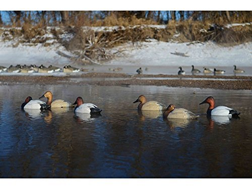 Avery Outdoors GHG Pro-Grade Canvasback Duck Decoys - 6 Pack by GHG