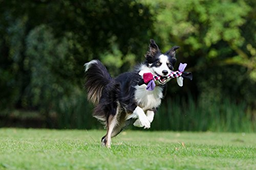 TED POSTER Playful British Sheepdog Border Collie Running Dog Poster 24x16 Adhesive Decal ()