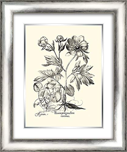 er Peony III 20x24 Silver Contemporary Wood Framed and Double Matted Art Print by Besler, Basilius ()