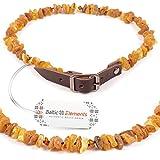 Baltic Elements NEW Amber Dog Collar