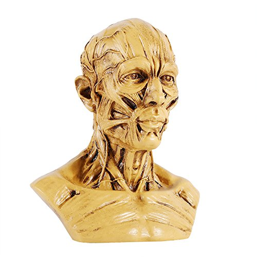 Resin Human Model Anatomy Skull Head Muscle Bone for Artist Drawing Sketch Medical Study(Antique Yellow ) Artist Antique