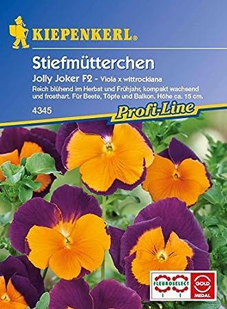 Stiefmütterchen Viola Jolly Joker zweijährig Höhe 15 cm Samen