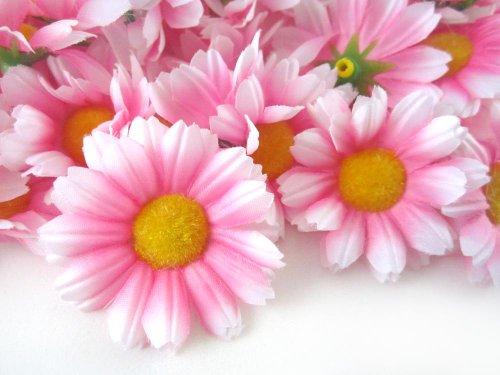 (24) Silk Pink White Edge Gerbera Daisy Flower Heads , Gerber Daisies - 1.75