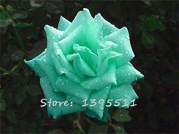1bag 100pcs Graines Rares Rose Couleur Rare Rose Fleur