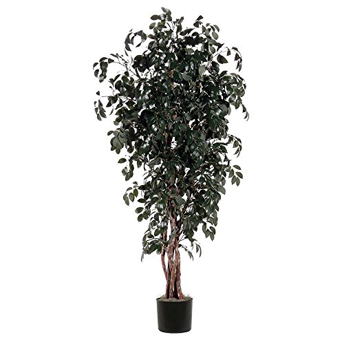 Vickerman TEX0760-07 Everyday Sakaki Tree, Green, 6' by Vickerman