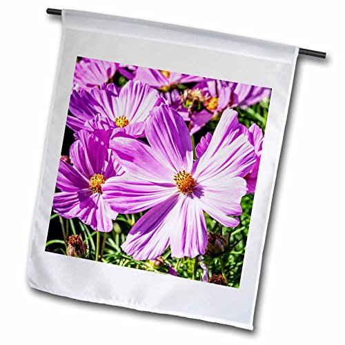 3dRose Alexis Photography - Flowers - Pink daisy flowers on a sunlit flowerbed. Summer joy - 12 x 18 inch Garden Flag ()