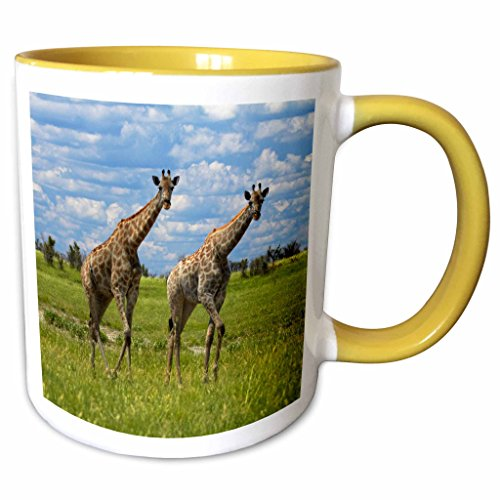 (3dRose Danita Delimont - David Wall - Giraffe - Giraffe Giraffa camelopardalis, Nxai Pan NP, Botswana, Africa - 15oz Two-Tone Yellow Mug (mug_187904_13))