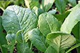 Mustard Greens Seed, Tendergreen, Heirloom, Organic, Non Gmo, 100 Seeds, Green
