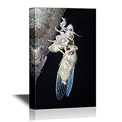 Insects Artwork Series Canvas Wall Art - Cicada on Its Shell in The Night - Gallery Wrap Modern Home Art | Ready to Hang - 12x18 inches