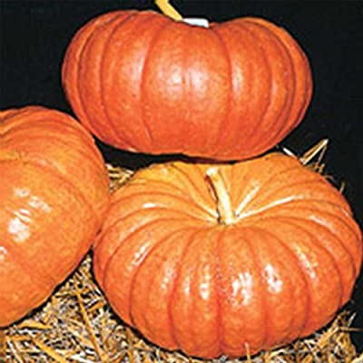 Organic Cinderella Pumpkin Garden Seeds - French Heirloom Pumpkins - Non-GMO - Red-Orange Variety - Vegetable Gardening Seed