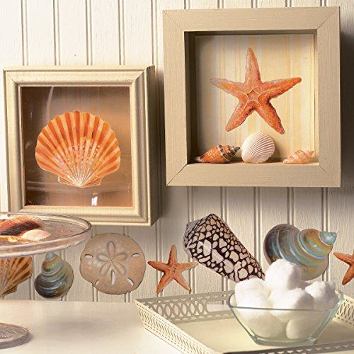 Wallies-Wall-Decals-Seashore-Shells-Wall-Stickers-Set-of-24