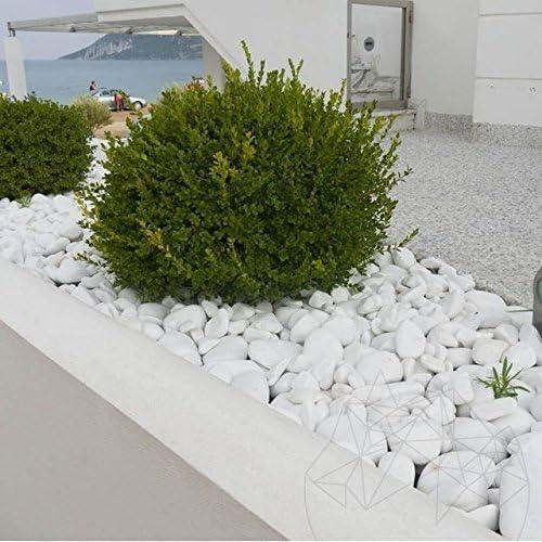 STONED® Piedras de Piedras de Thassos de Color Blanco Puro ...