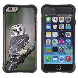 Suave TPU GEL Carcasa Funda Silicona Blando Estuche Caso de protección (para) Apple Iphone 6 PLUS 5.5 / CECELL Phone case / / owl surprised feathers nature wings /