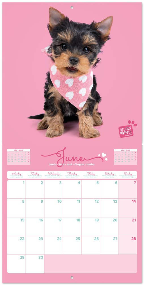 Erik/® Licenza ufficiale 30x30 cm 12 mesi Calendario 2020 da muro Studio Pets Lab