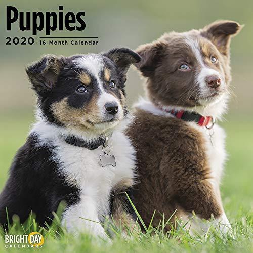 2020 Puppies Wall Calendar