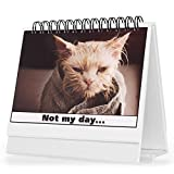 Cat Office Supplies Best Deals - Office Gift For Cat Lovers - Moodycards! Make Everyone Laugh with These Adorable and Hilarious Cats - Let The Kittys Tell Everyone How You Feel! A Terrific Office Gift! 25 Different Moods