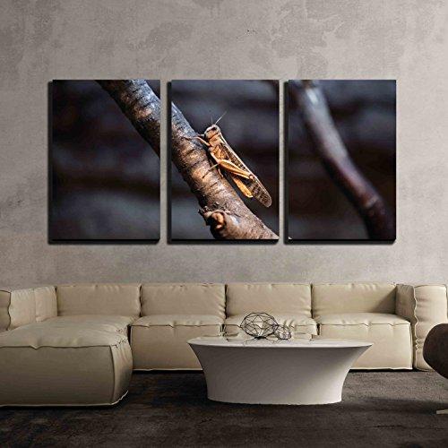 Desert Locust (Schistocerca Gregaria) Wildlife Animal x3 Panels