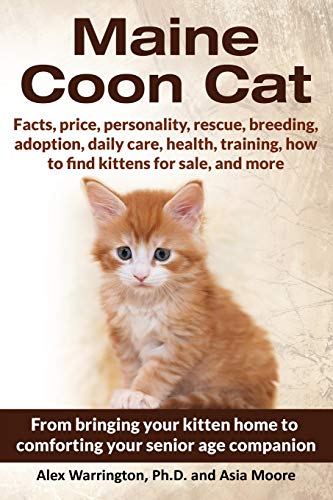 Maine Coon Cat: From Bringing Your Kitten Home to Comforting Your Senior Age Companion (Maine Kitten Cat Coon)
