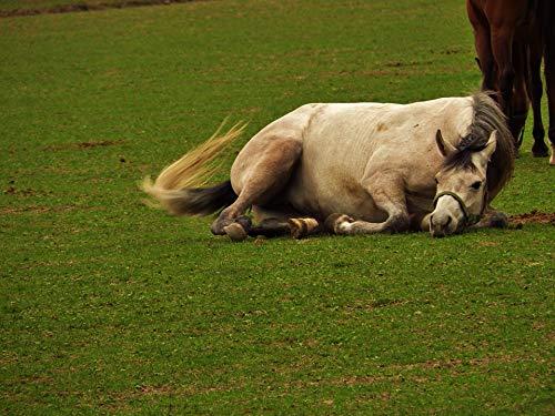 - Home Comforts Framed Art for Your Wall Horse Arabian Horse Stocks Vivid Imagery 10 x 13 Frame