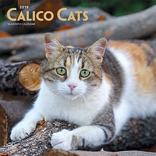 Calico Cats 2019 12 x 12 Inch Monthly Square Wall Calendar, Animals Domestic Cats Calico (Multilingual Edition)