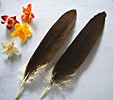 eagle feather fan - Ornament Eagle Fan with Feather New! Sale 20pcs / lot Beautiful Birds Eagle Feathers, 35-50cm, DIY Decorative Ornaments, Feather Fan subassembly