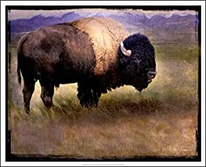Bison Portrait II HIGH QUALITY MUSEUM WRAP CANVAS Print Chris Vest 21x17