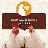 Manna Pro Chicken Treats | Harvest Delight Chicken